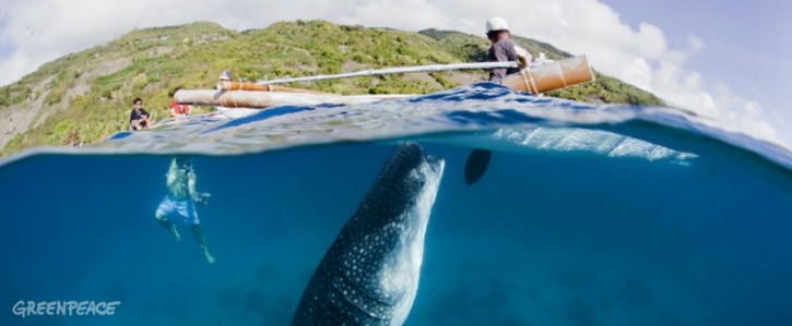 Stop swimming with whale sharks in Oslob