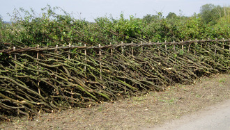 Brompton hedgelaying