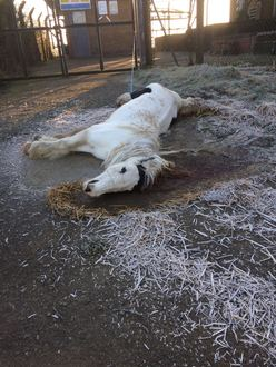 Get DEFRA to act on the equine crisis. I have called her Angel. She is unknown.
