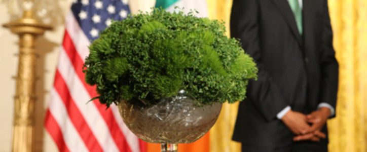 Shamrock for Trump: Not in my name