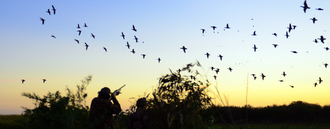 Ban shooting of wild birds in Christchurch Harbour
