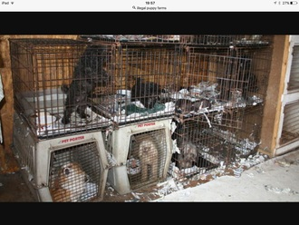 Ban illegal animal breeders from keeping animals for life