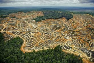 Stop Tesco using Palm Oil in their own brands