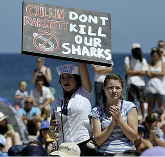 Stop culling the WA sharks!