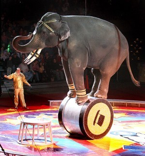 End Wild Animal Circuses - support the Prohibition of Wild Animals in Circuses Bill 2017