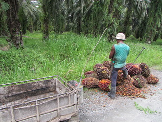 £20 should not be made from palm oil