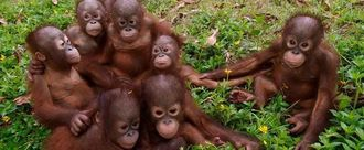 Provide higher primates with same protection as humans