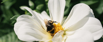 Don't sell plants treated with bee-harming pesticides