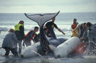 SAVE THE CETACEANS