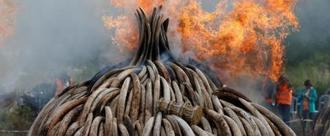 Ban the Ivory Trade