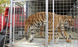 Ban the use of wild animal in circuses