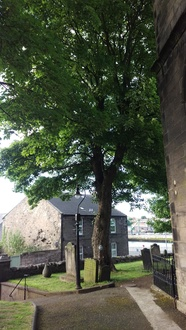 Save three trees in Tweedmouth Churchyard