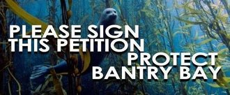Bantry Bay Says No to the Mechanical Extraction of Native Kelp Forest