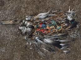 Stop Coca-Cola from Choking our Oceans