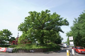 Save 200 year old Oak Tree at EATsgate