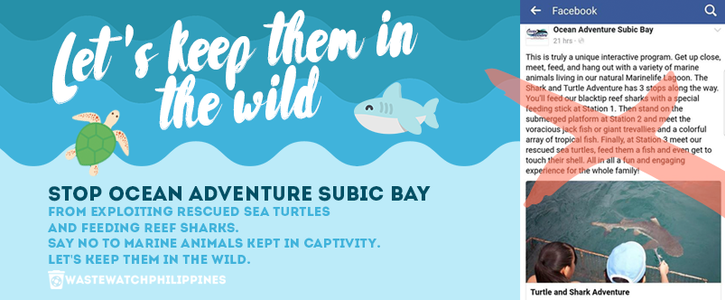 Keep Them in the Wild: Turtle and Shark Adventure ( Ocean Adventure Subic Bay)