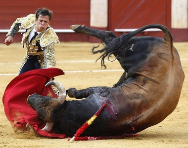 Help ban the cruelty of Bull Fighting no animal should suffer like this