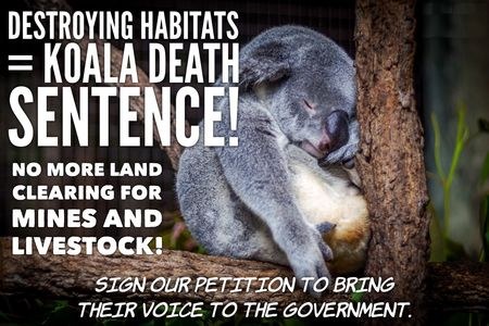 Stop Land Clearing That Will Wipe Out Koalas