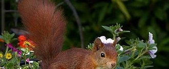 Protect Red Squirrels in Perth and Kinross