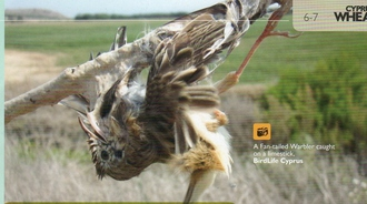 Stop Migrating Birds being slaughtered in Malta and Cyprus