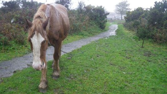 STOP HORSE TETHERING IN THE UK (and other equines)