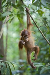 Stop Using Palm Oil