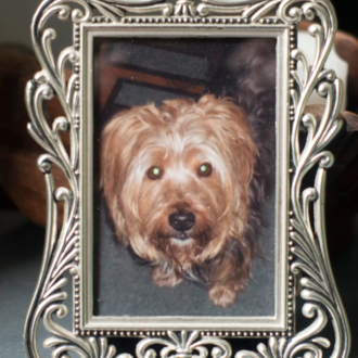Free Alfie the Yorkshire terrier from his Met police secret captivity!
