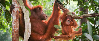 Take palm oil out of food products