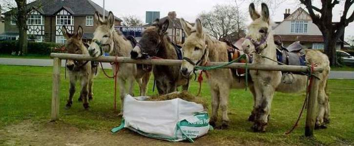 Save Clevedon Donkeys