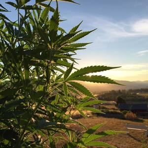 Let's Make Cannabis a Truly Sustainable Industry