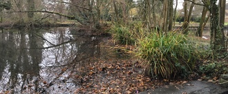 Save Bradbourne Lakes from neglect