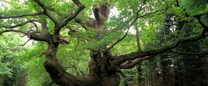 Protect all our Ancient Woodlands and Rare Habitats for the People and Nation