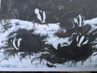 End the badger cull now