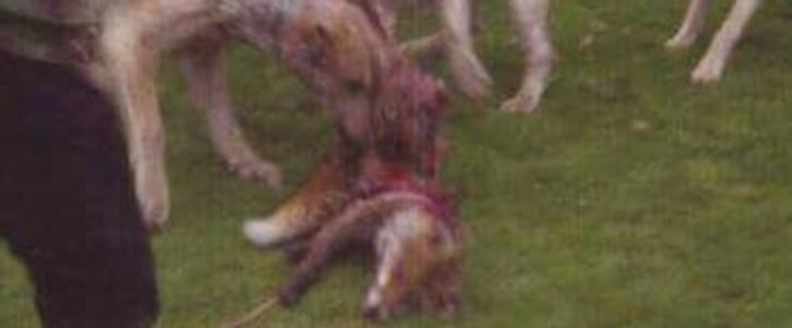 STOP TRAIL HUNTING ON ALL NATIONAL TRUST LAND