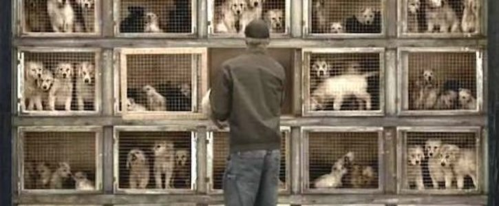 Ban dog breeding and sale of dogs without a licence