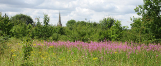 Protect Thaxted's wild spaces