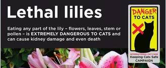KEEP CATS ALIVE - LABEL LILIES SAFELY