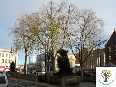 Save the Fitzalan Square Plane Trees
