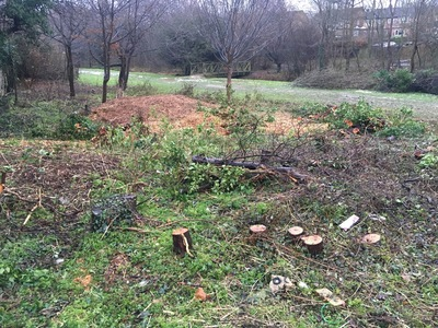 Save wildlife habitat and trees in Thorley