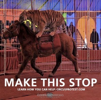 Stop the use of ALL animals in circuses!