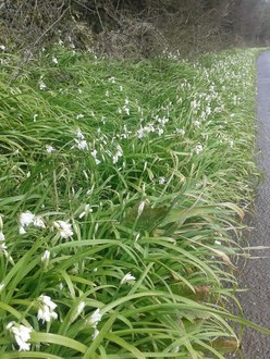 Stop spraying weedkillers in Public areas and Road verges