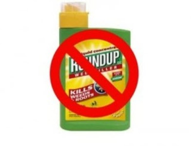 Ban now the use of Glyphosate based and all other toxic weedkillers by Sligo County Council