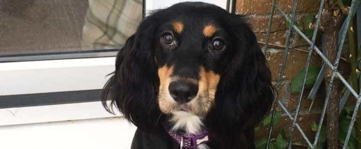 Change the Law for Dog Theft in the UK
