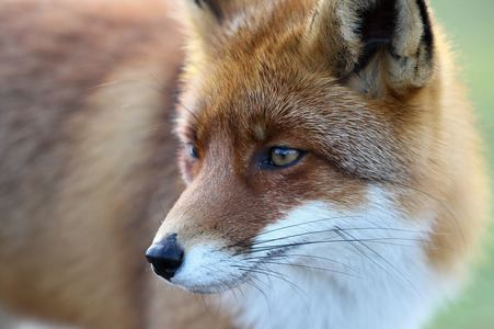 Make indiscriminate Killing of Wildlife by Companies Illegal