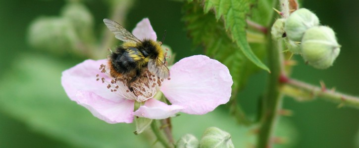 Keep our Park Sunny - save rare wildlife and endangered bees!