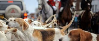 Enforce muzzles on hunting hounds when out with local hunts