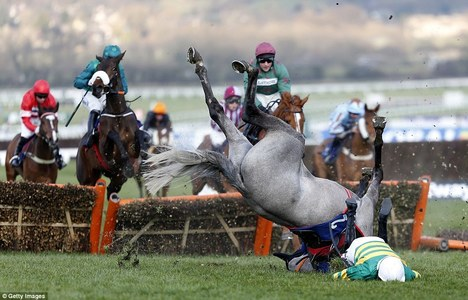 ban horse jump racing campaigns by you