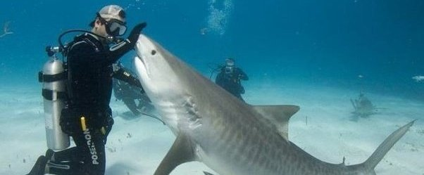 Ban shark fin soup and the sale of shark fins in the UK ...