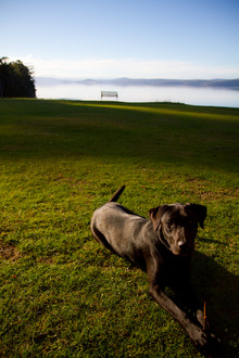 Increase the Off-Lead Exercise areas for Dog Owners on the Hobart Rivulet Track