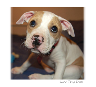 Make it compulsory to have a dog licence for ownership and breeding. Ban the BSL